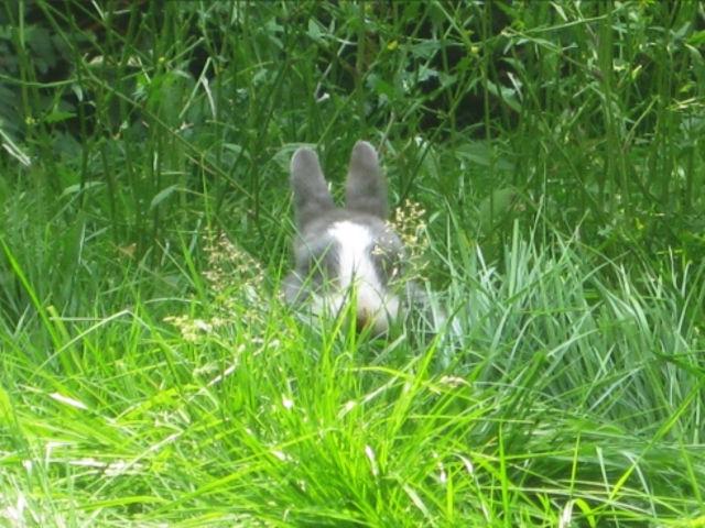 Kaninchen versteckt sich im Gras