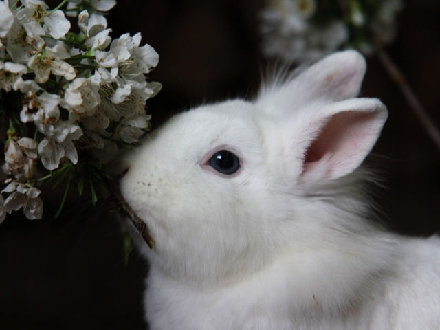 Kaninchen weiß frisst Blühten