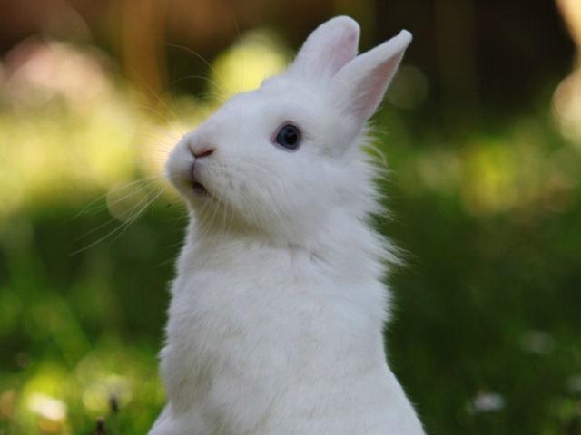 Kaninchen weiß macht Männchen