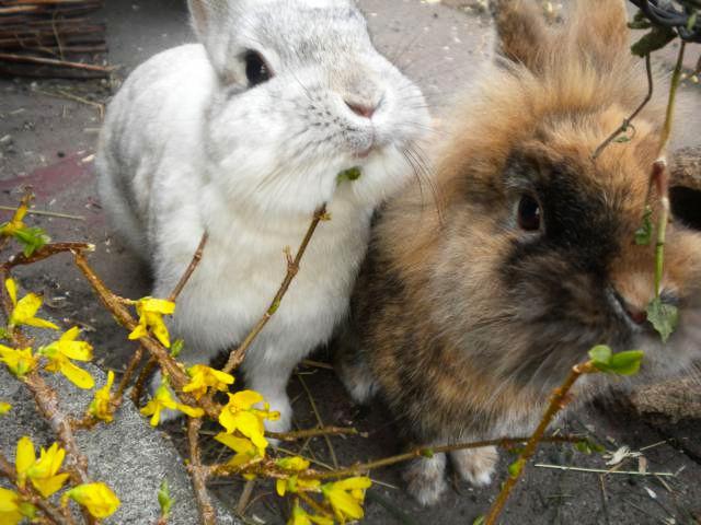 Kaninchenpaar möchte Leckerlis