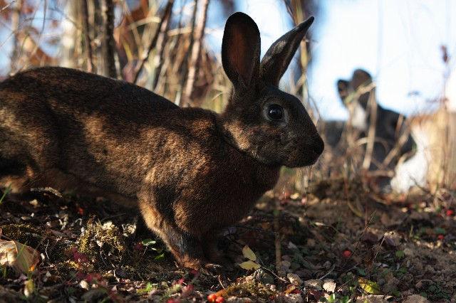 Kaninchen braun im Herbst
