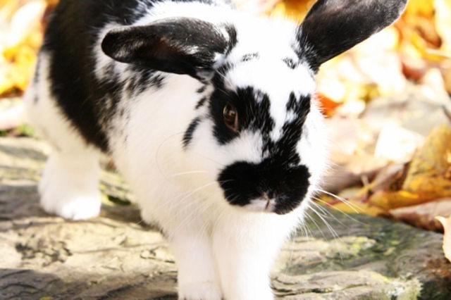 Kaninchen springt auf Stein