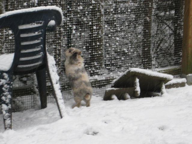 Kaninchen gescheckt steht im Schnee