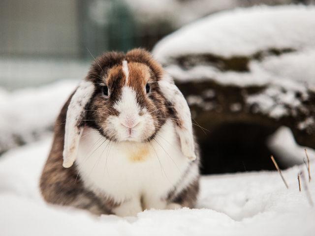 Kaninchen im Schnee 14