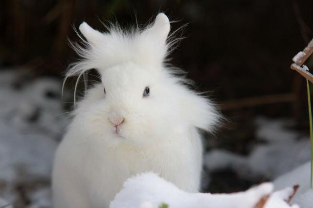 Kaninchen im Schnee 2