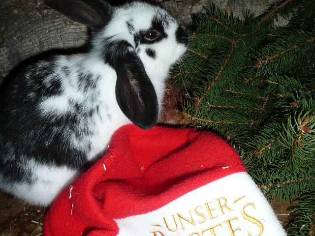 Kaninchen unter Tanne
