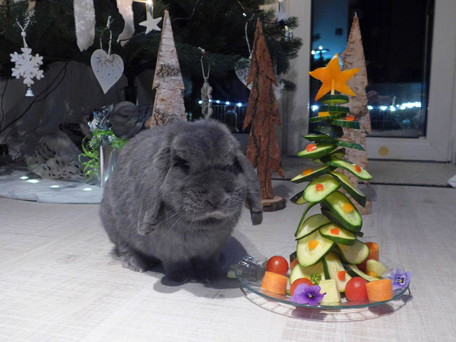 Kaninchen vor Futterweihnachtsbaum