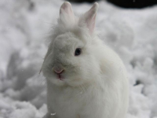 Kaninchen weiß sitzt im Schnee