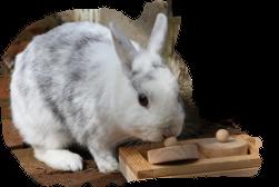 Kaninchen mit Spielzeug