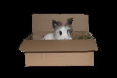 Kaninchen sitzt im Pappkarton