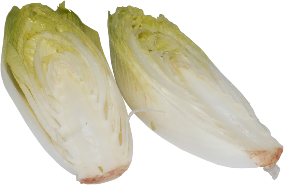 Chicorée 1