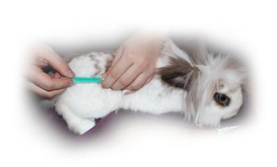 Kaninchen bekommt Spritze