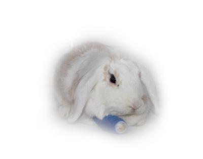 Kaninchen mit Verband